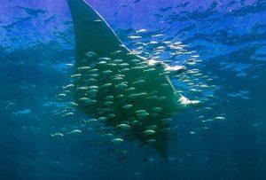 Whale-Shark-7